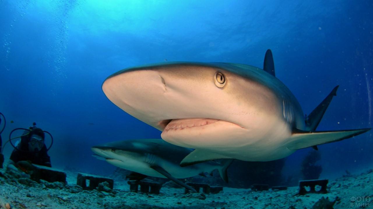 Акулы под наблюдением учёных в аквалангах