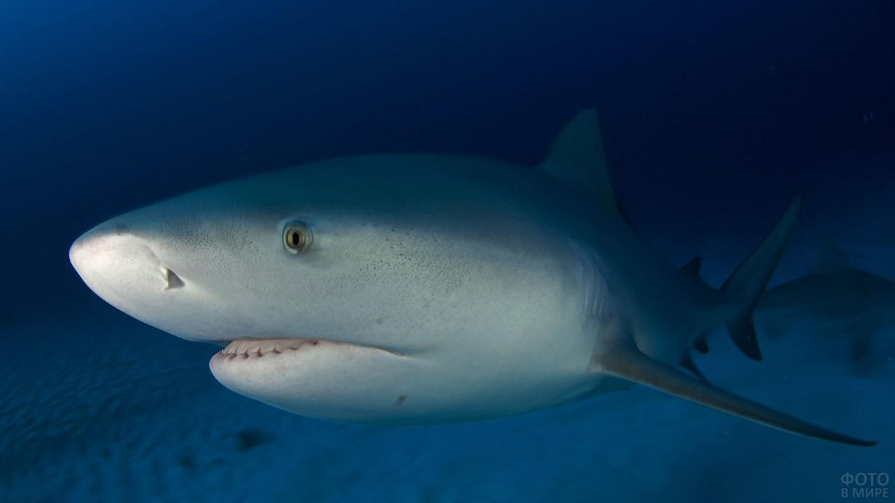 Морда акулы из зоопарка Флориды