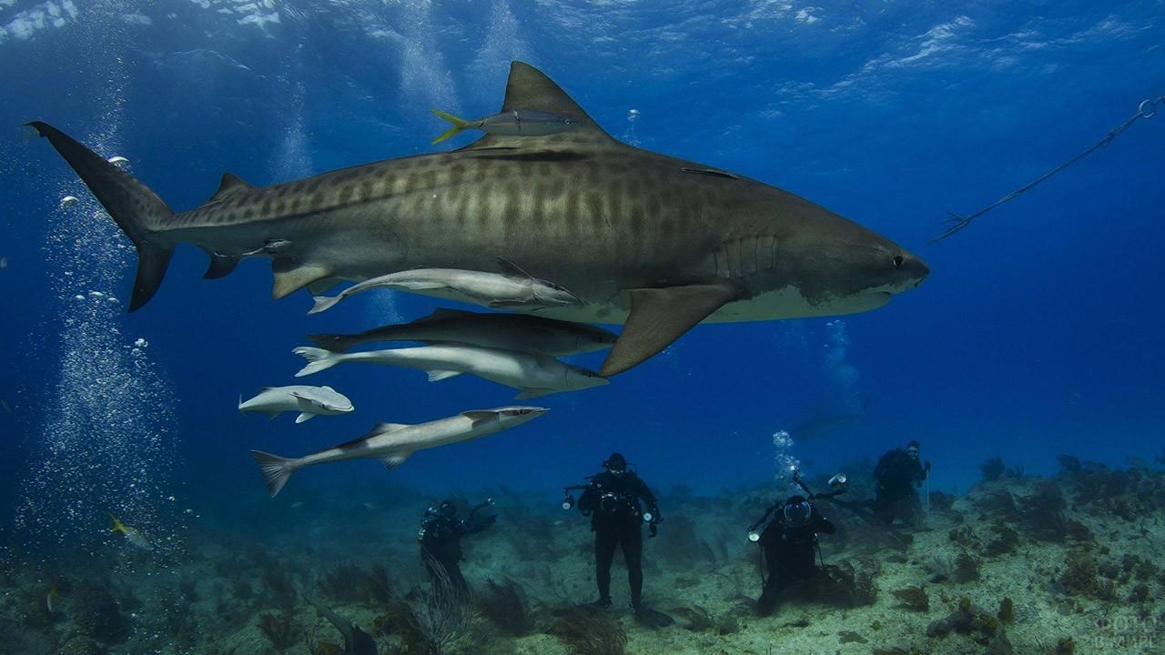 Акулы фото с названиями