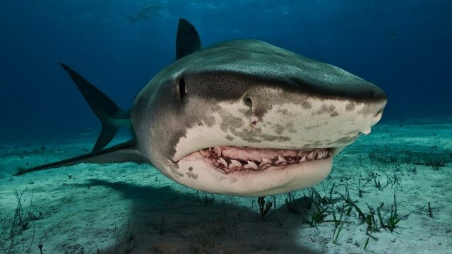 Жуткая морда акулы-убийцы