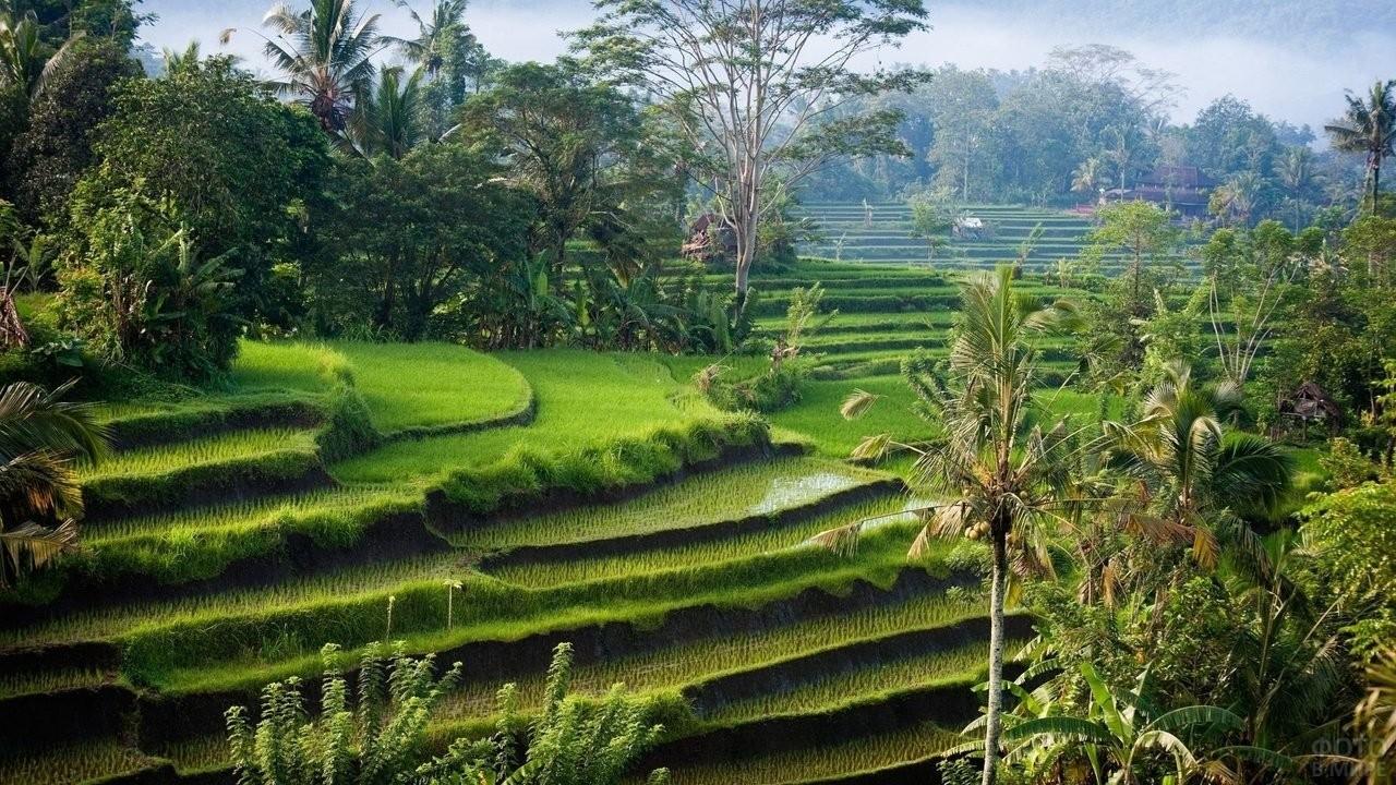 Рисовые террасы на острове