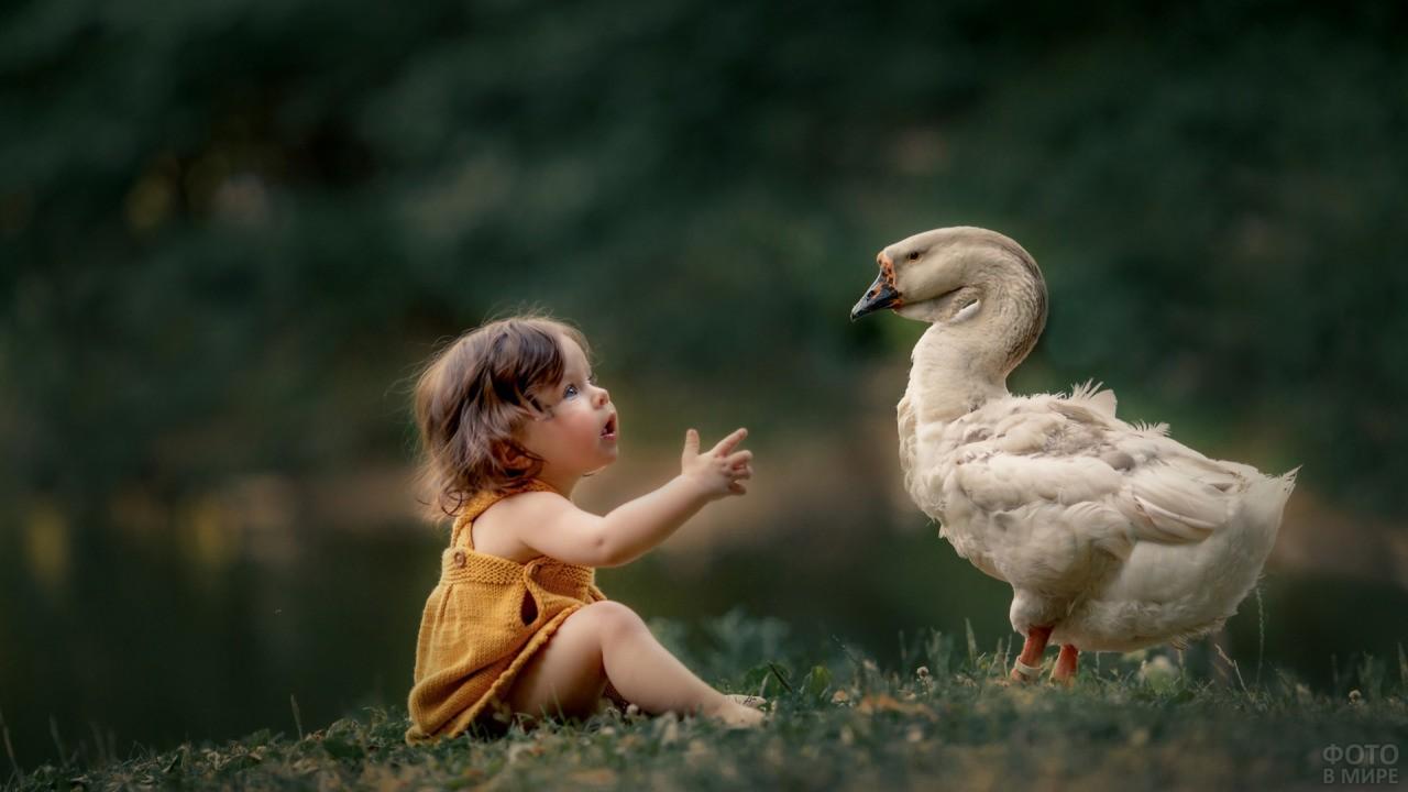 Малышка разговаривает с гусём