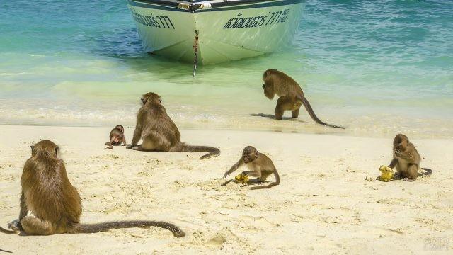 Обезьяны на острове в Таиланде