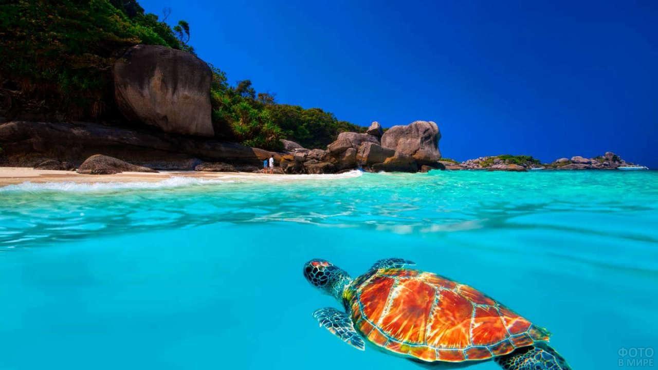 Черепаха в море около Симилани