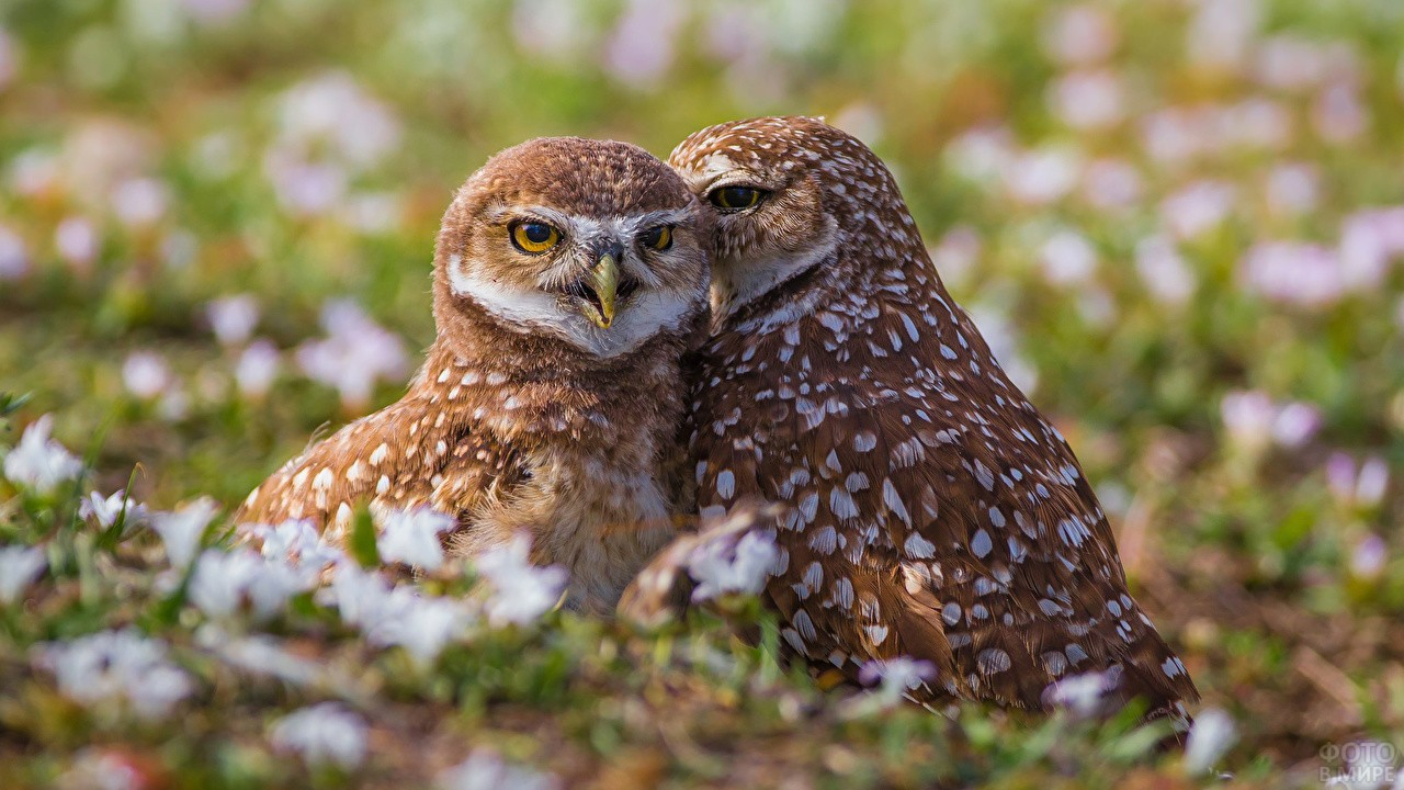 Два совёнка сидят в траве