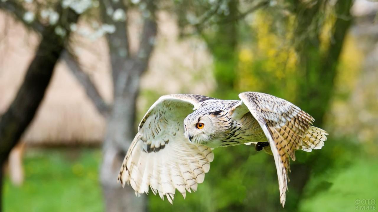 Полёт совы среди леса