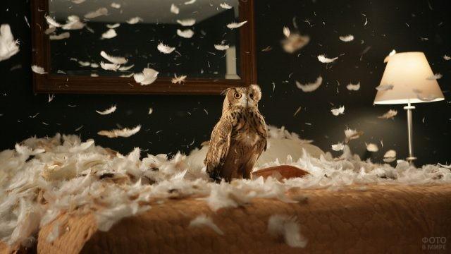 Сова в куче перьев