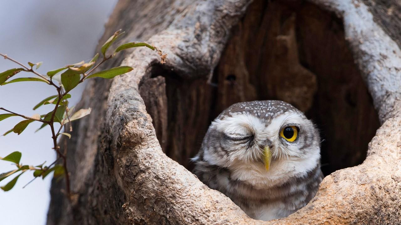 фото сонной совы вспышке