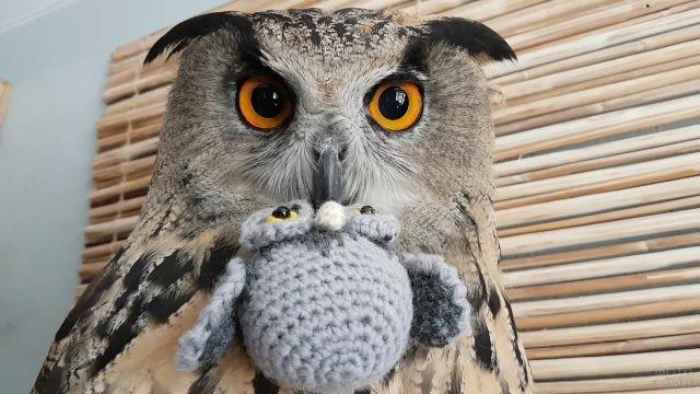 Ушастая сова с вязаной игрушкой