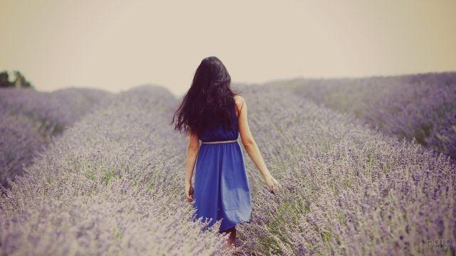 Черноволосая девушка в синем платье в лавандовом поле