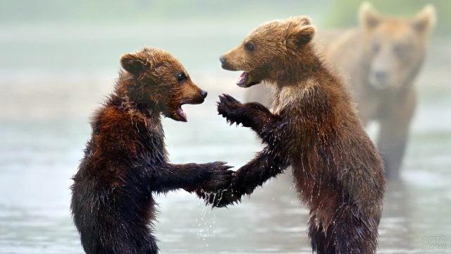 Два мокрых медвежонка касаются друг друга лапами