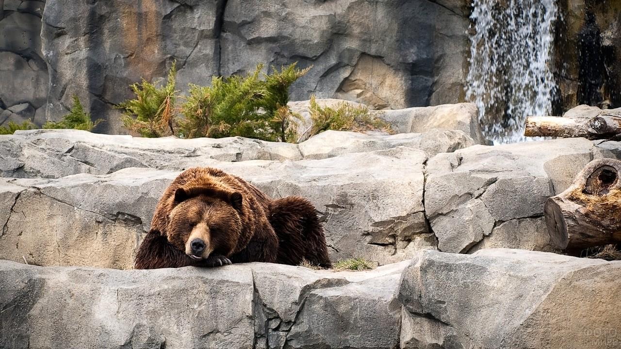 Медведица спит у водопада