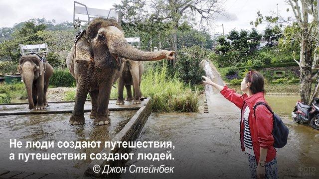 Путешествия создают людей - туристка и слон