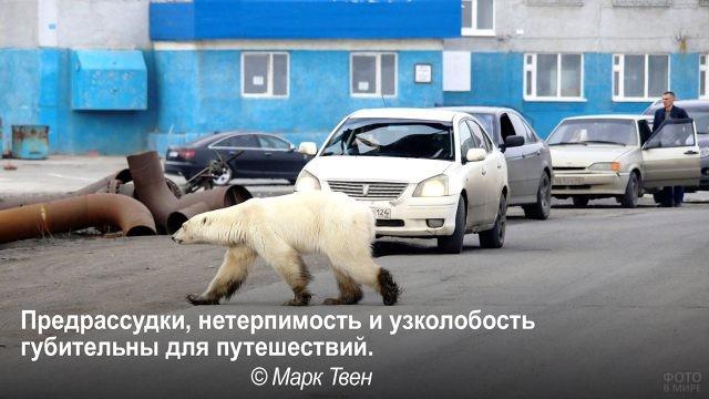 Путешествуя оставьте предрассудки - медведь на улице