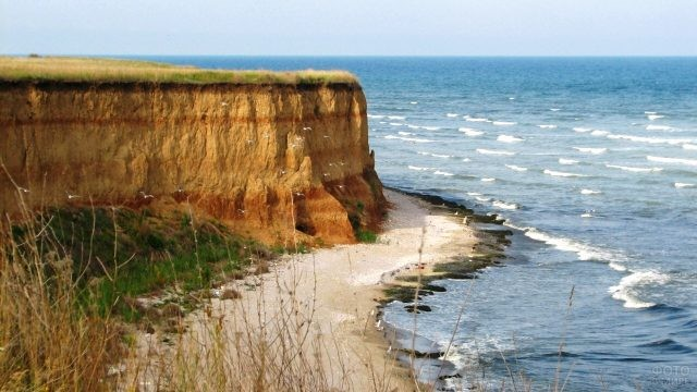 Чайки над диким пляжем в Румынии