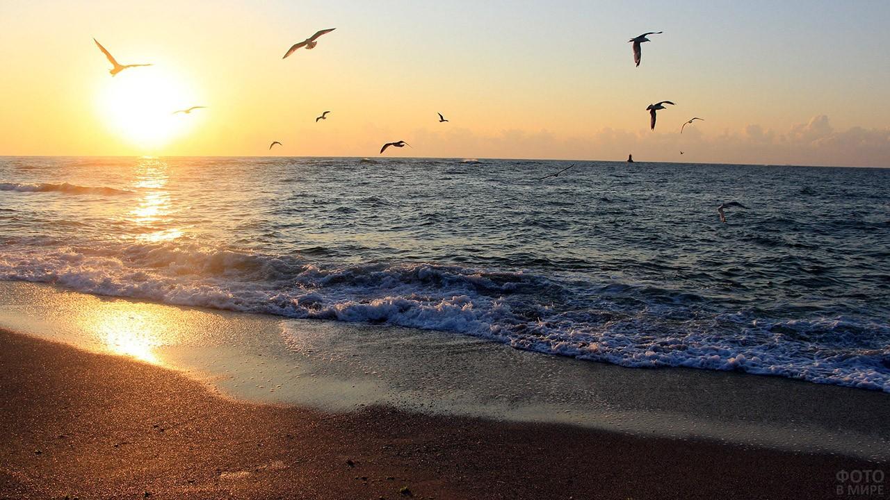 Чайки над прибоем на фоне восхода солнца