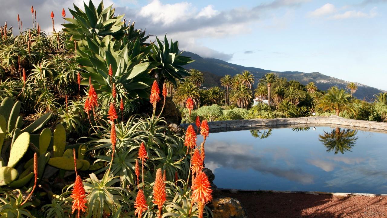 Красивые цветы на острове Тенерифе
