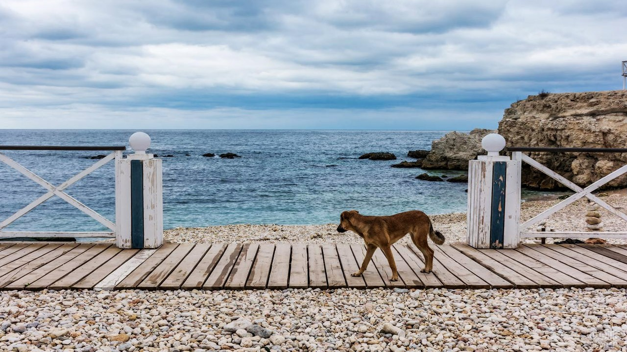 Собачка на деревянном настиле у пляжа