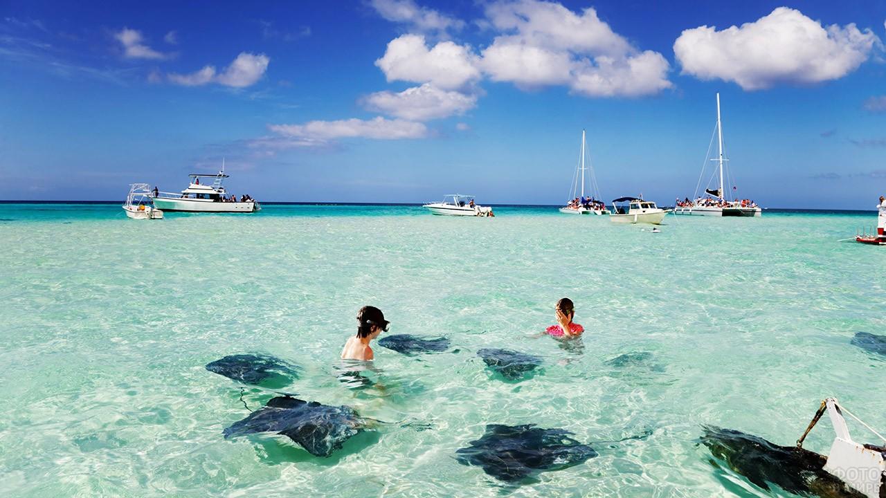 Дети ныряют со скатами у берегов Кайманских островов