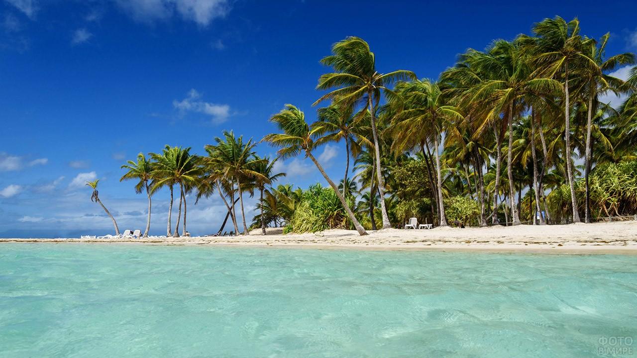 Пальмы на острове Гваделупа