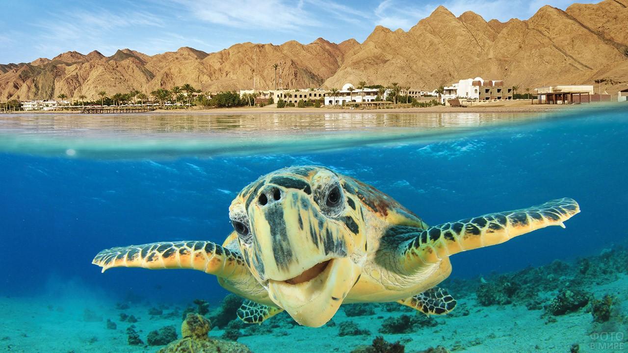 Черепаха у египетского побережья