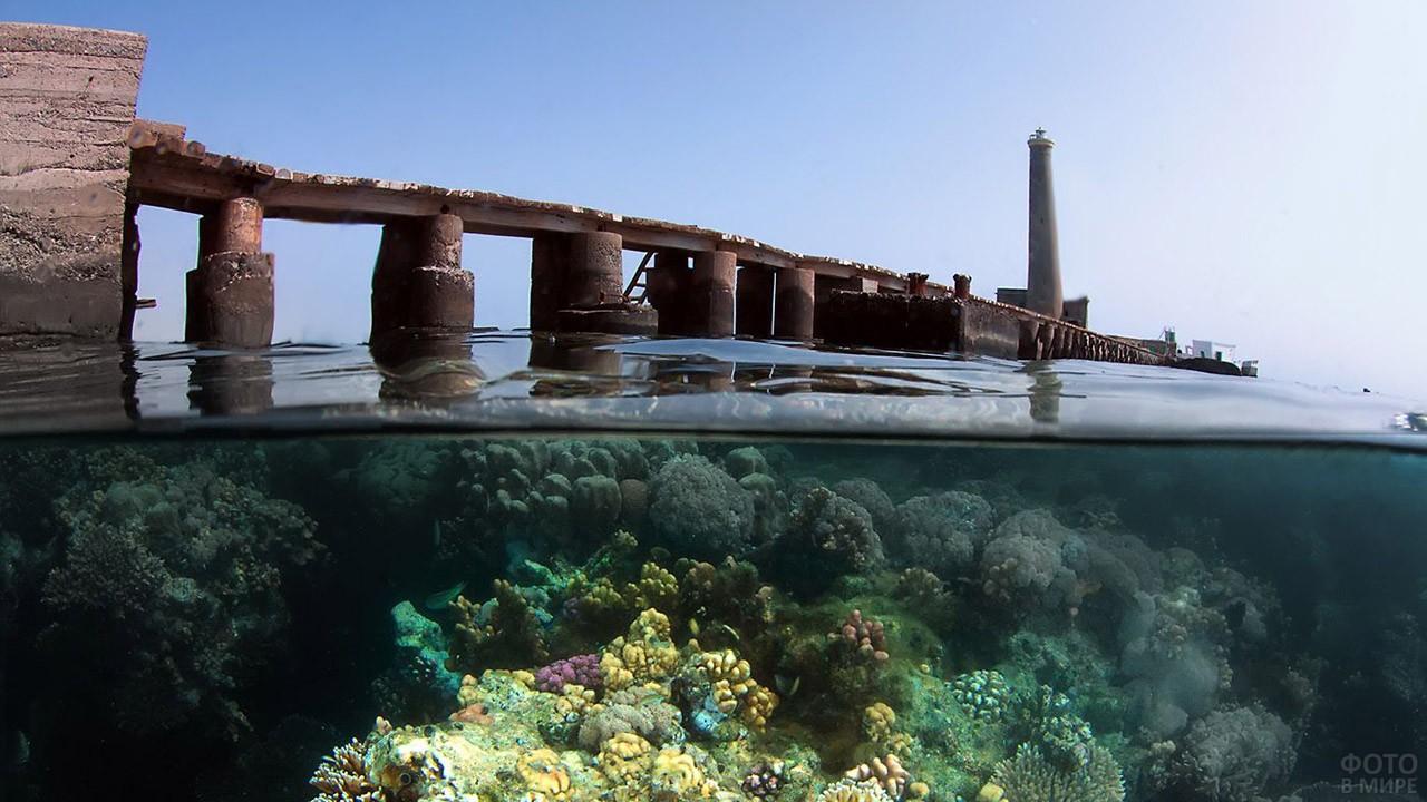Коралловый риф у берега Судана