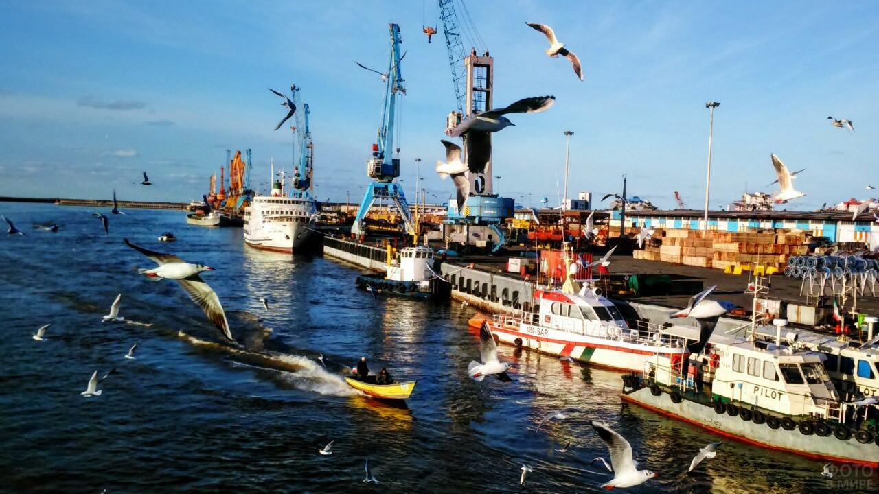 Птицы над портом Энзели в Иране