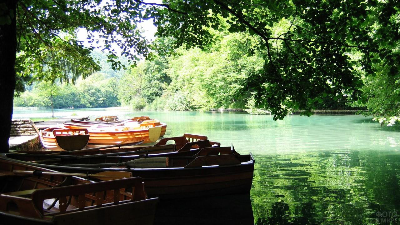 Лодки в тени многовековых деревьев