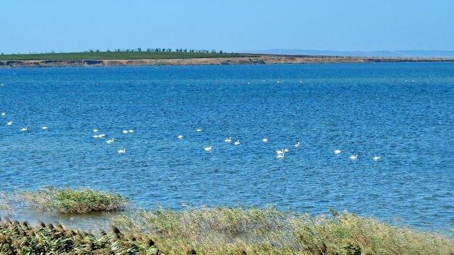 Лебеди в Динском заливе