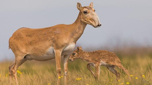 Детёныш идёт к маме