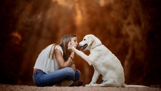 Собака подаёт лапу девушке
