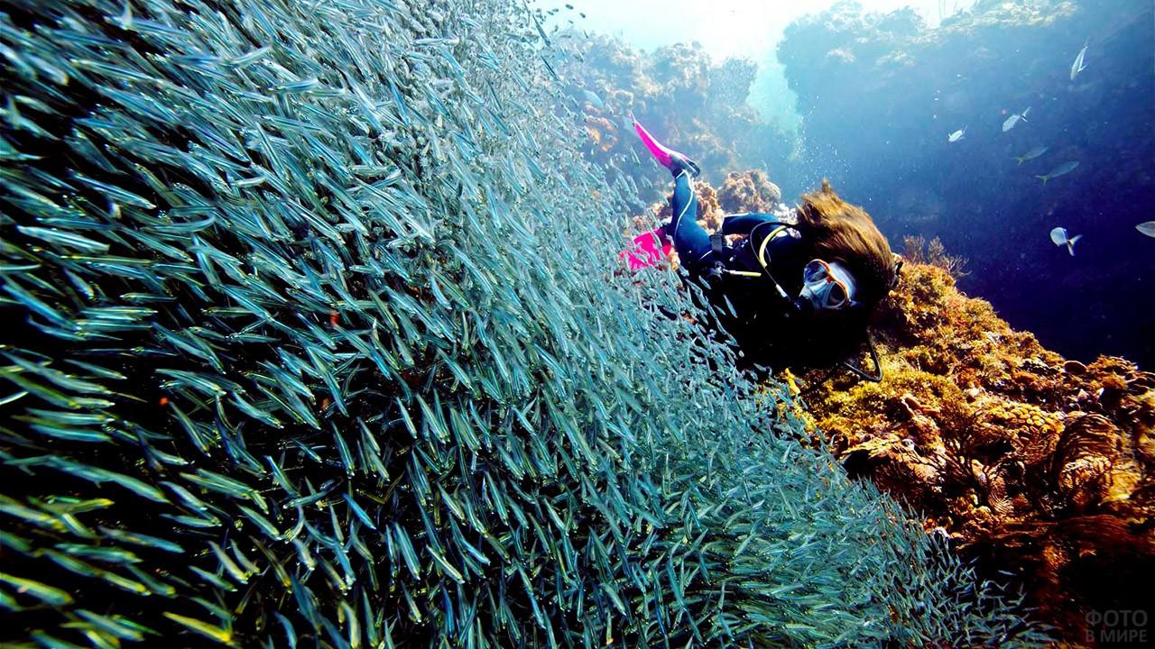 Подводный мир морского парка Кайо-Пьедрас на острове Варадеро