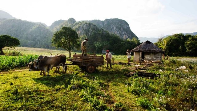 Работники действующей плантации в долине Де-лос-Инхеньос