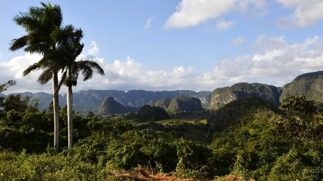 Стройные пальмы на фоне долины Виньялес