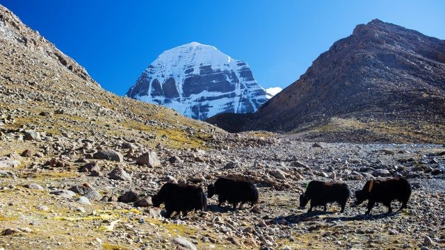 Козы из с подворья тибетского монастыря на северной стороне горы