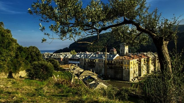 Олива на холме над монастырём Иверон