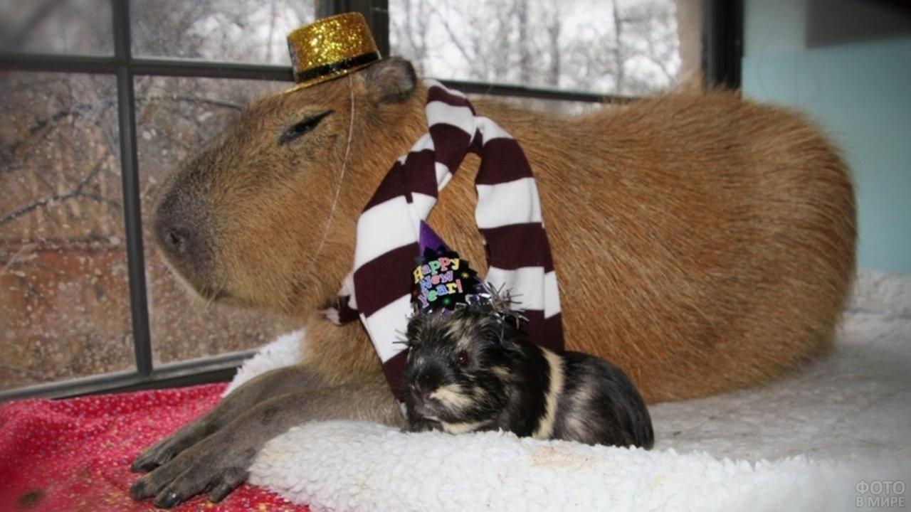 Капибара в шляпочке лежит рядом с мелким животным