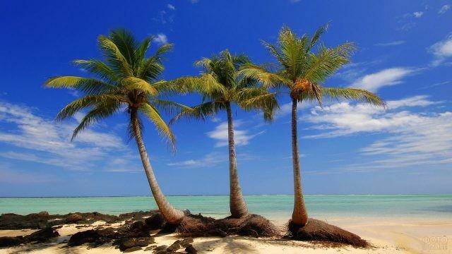 Три пальмы на берегу океана
