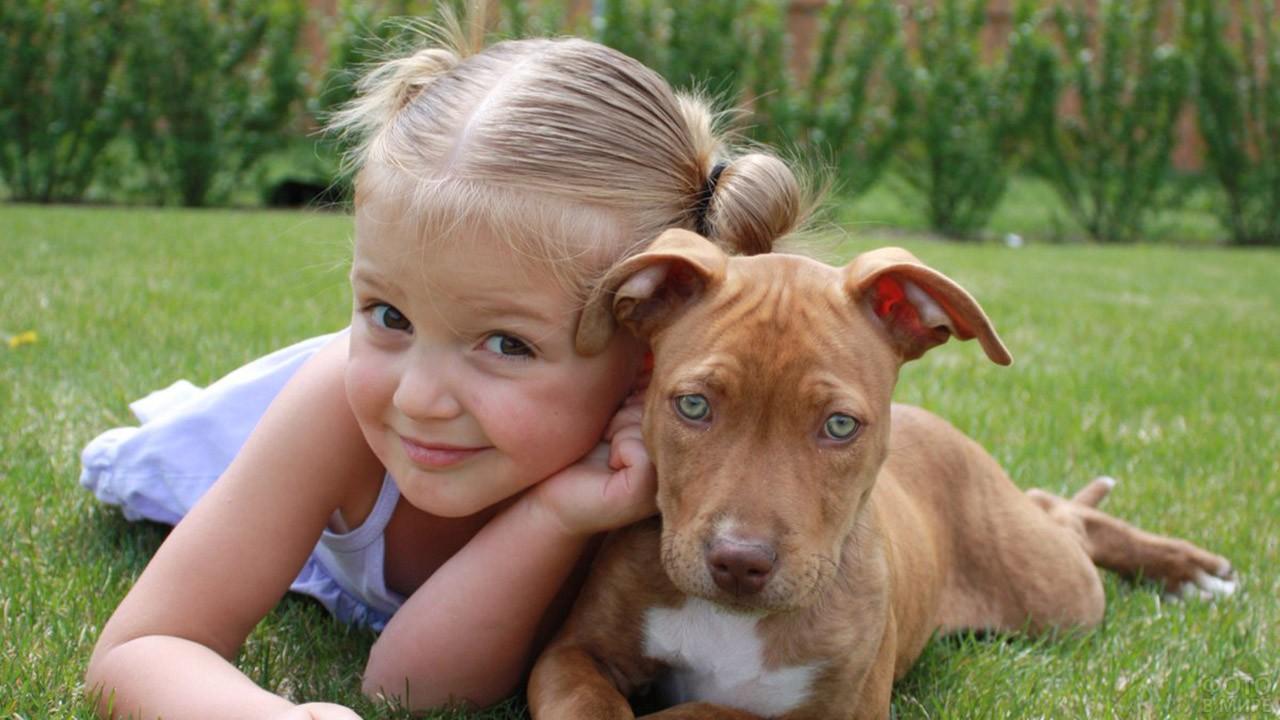 Девочка со щенком питбуля