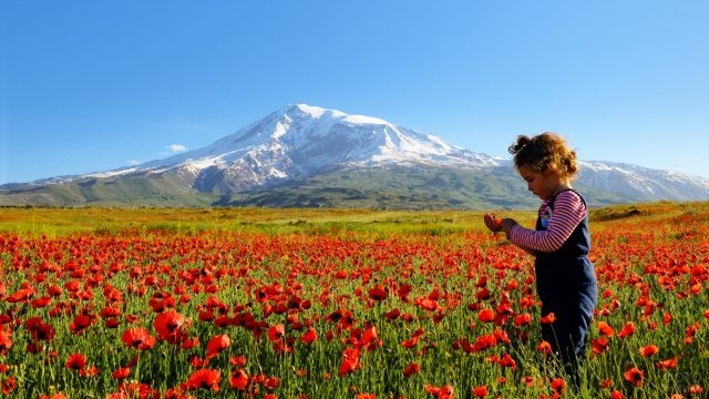 Девочка в цветущем поле на фоне горы Агрыдаг