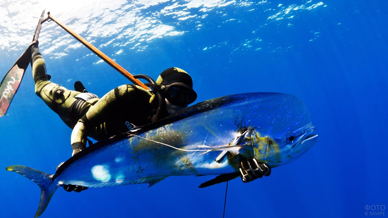 Дайвер с фантастической рыбой