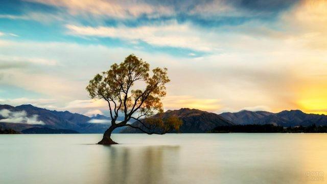 Одинокое дерево на озере Ванака
