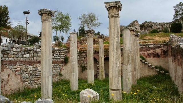 Одуванчики растут среди колонн