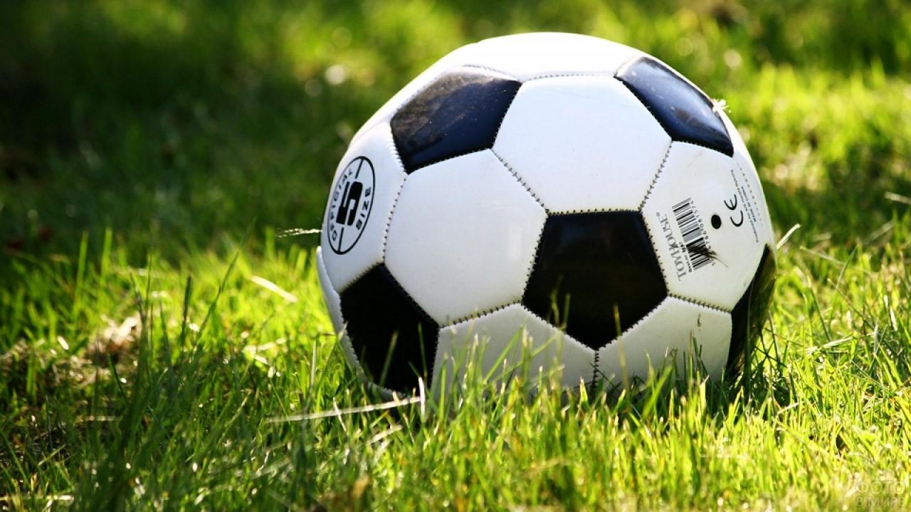 Мяч в весенней траве
