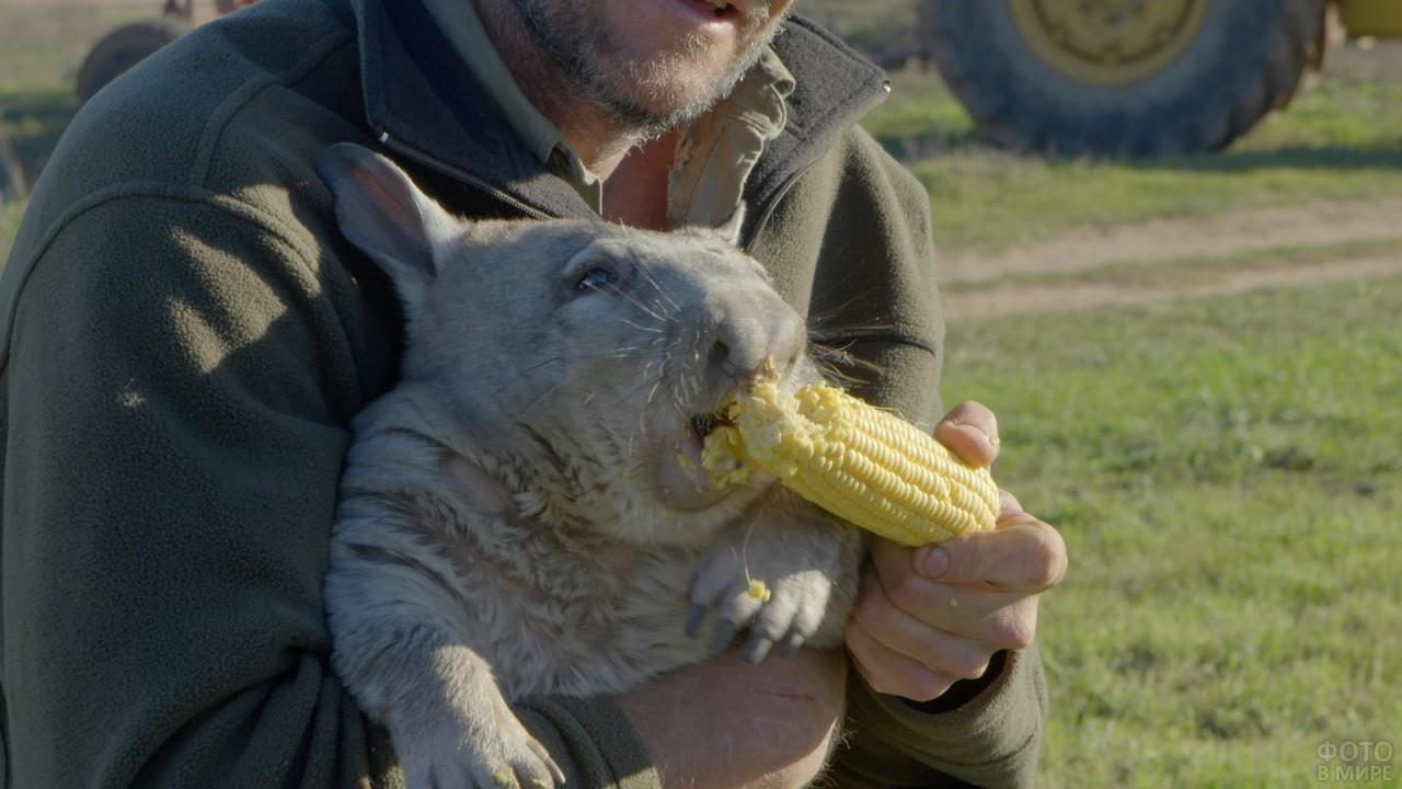 Малыш ест кукурузу
