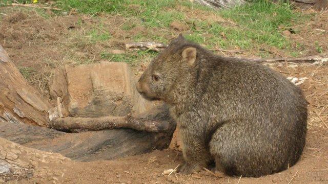Мини-медведь сидит около брёвнышка