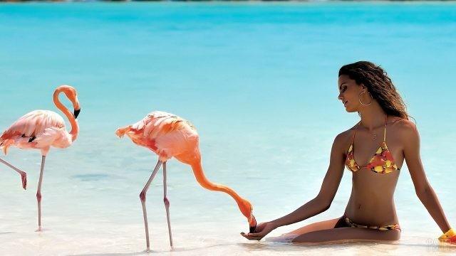 Девушка кормит фламинго