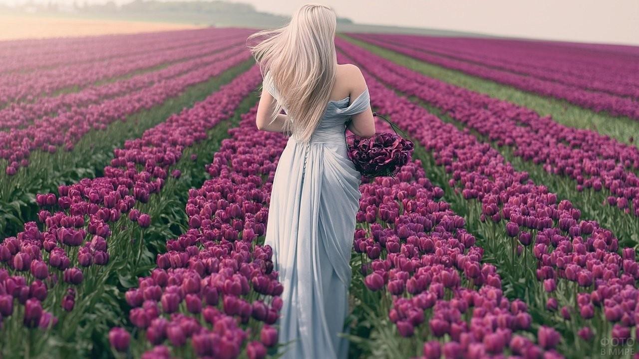 Блондинка на поле тюльпанов