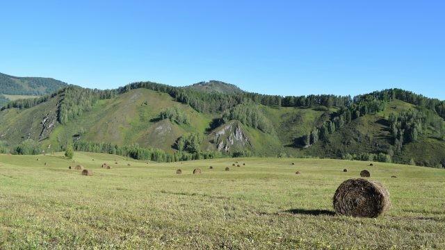 Вид с покоса на горы Алтая